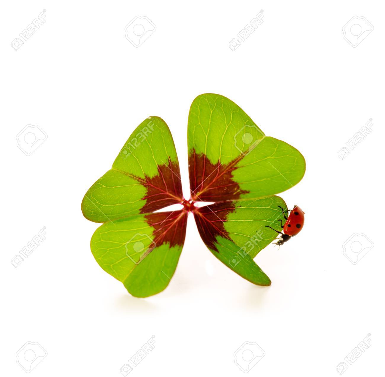 Lucky symbols four leaf clover and ladybugeen cloverleaf lucky symbols four leaf clover and ladybugeen cloverleaf and ladybirds lucky biocorpaavc Image collections