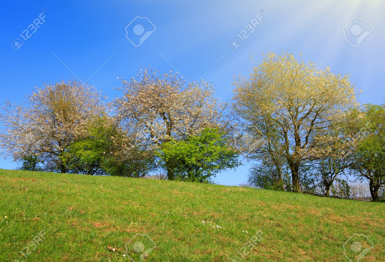 Spring field of grass and flowering trees with blue sky and sunlight spring field of grass and flowering trees with blue sky and sunlight stock photo izmirmasajfo