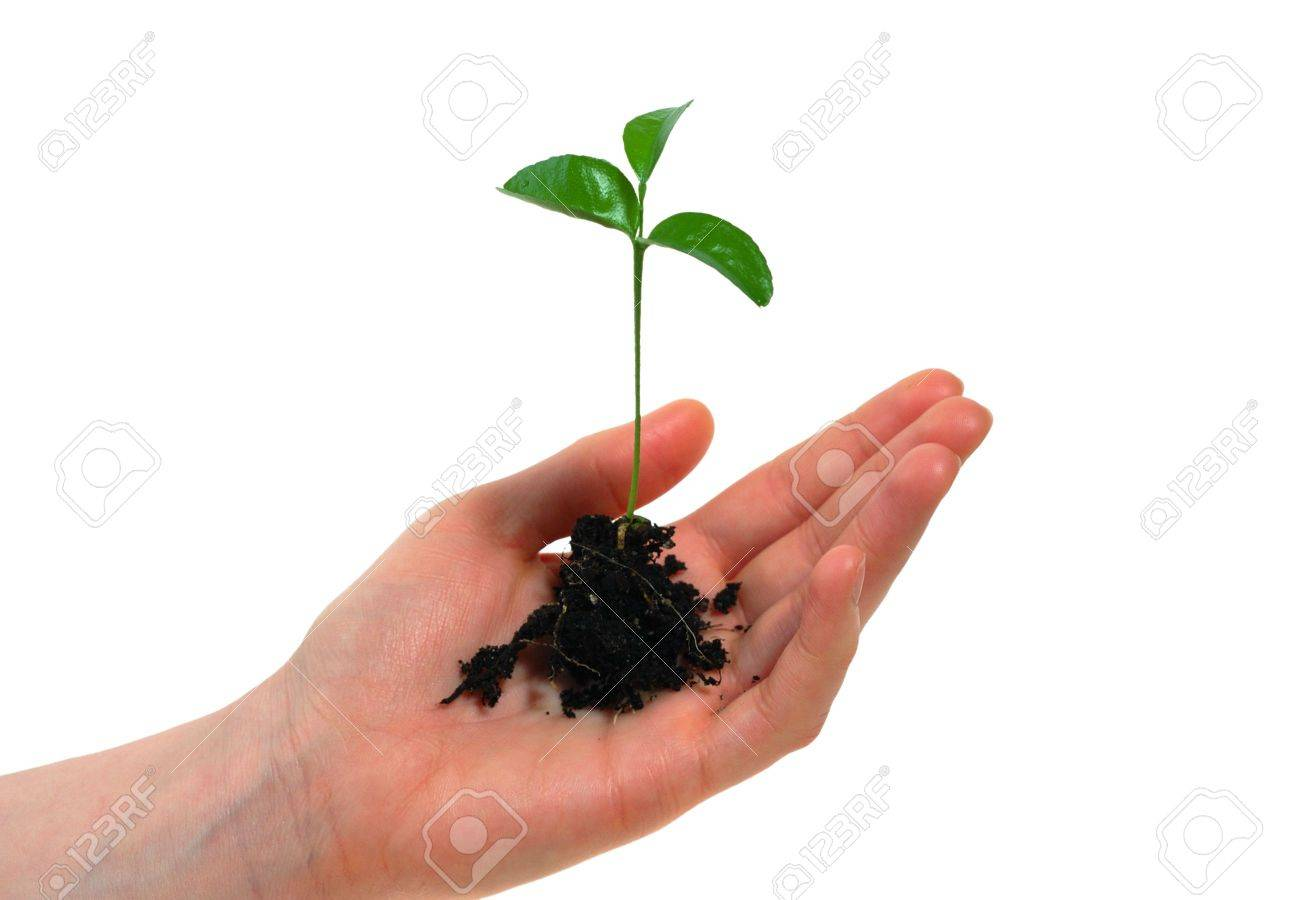Woman hand and a plant in it - 6355452