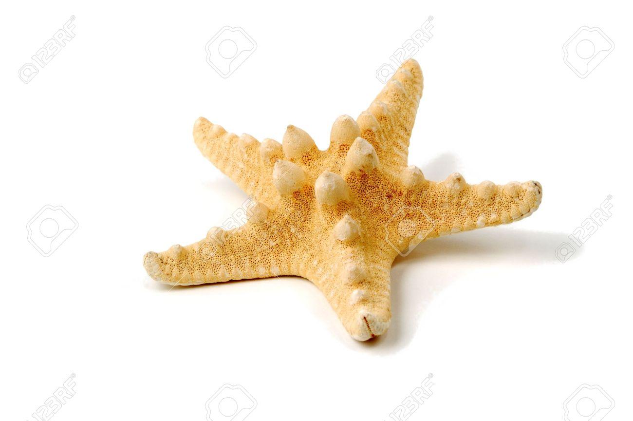 Sea-star over white background - 6355650