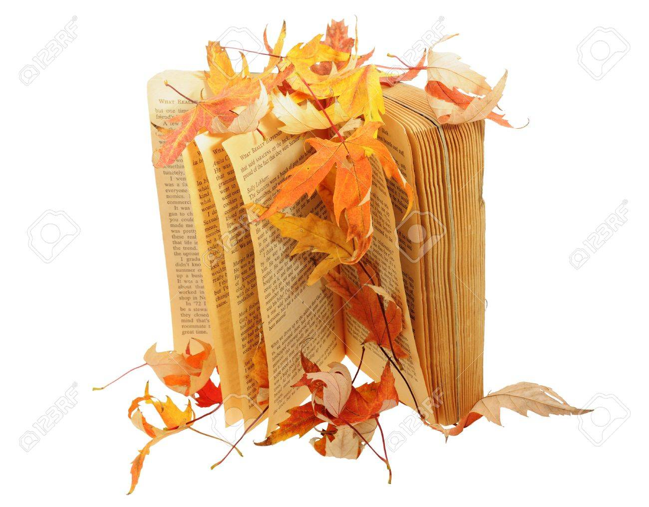 Book under leaves isolated - 8040469
