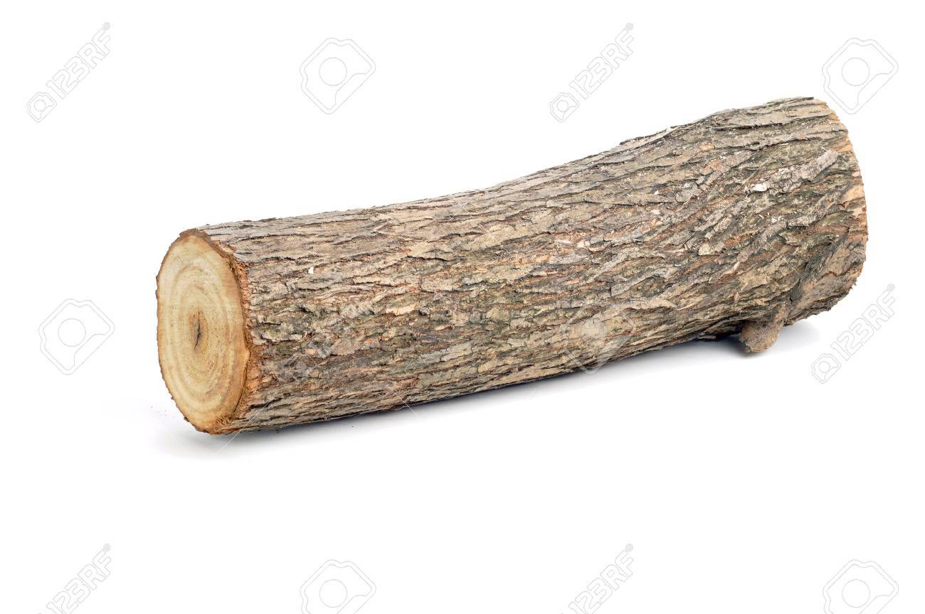 one willow log isolated over white background - 36158825