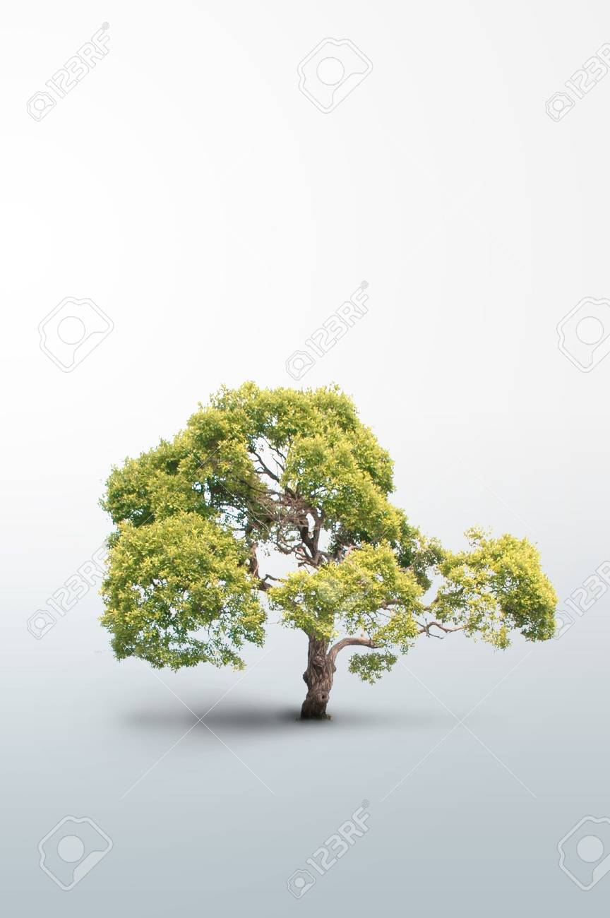 Isolated tree - Please look at my portfolio other kinds exist Stock Photo - 6321731