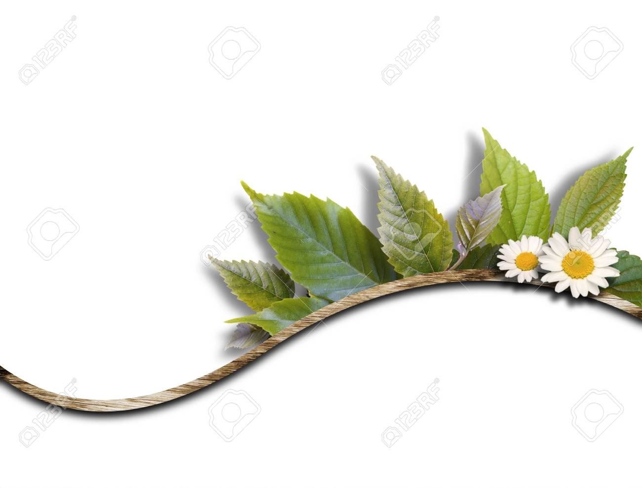 CG background of leaf and frame Stock Photo - 8162602