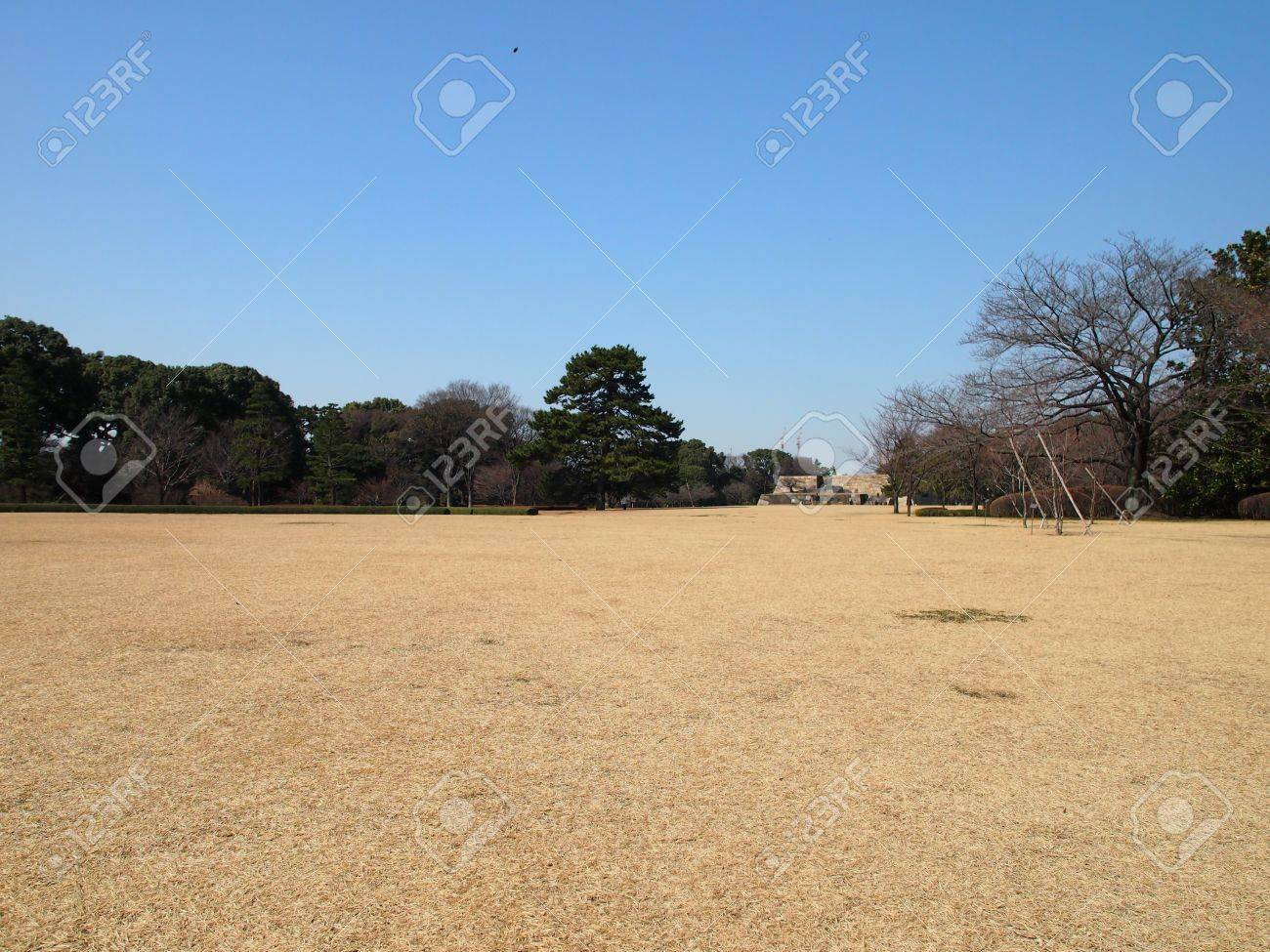 Giant Pine Tree at the end of the pasture Stock Photo - 18366227