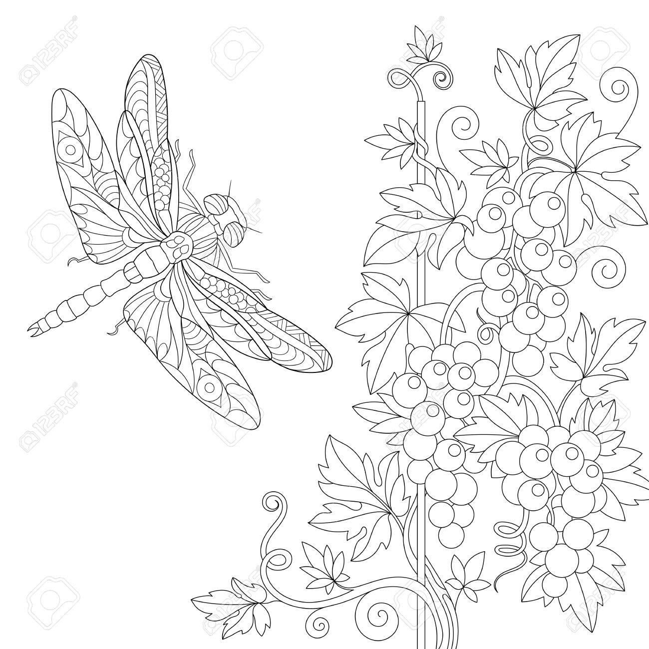 Coloring page of dragonfly and grape vine. Freehand sketch drawing..