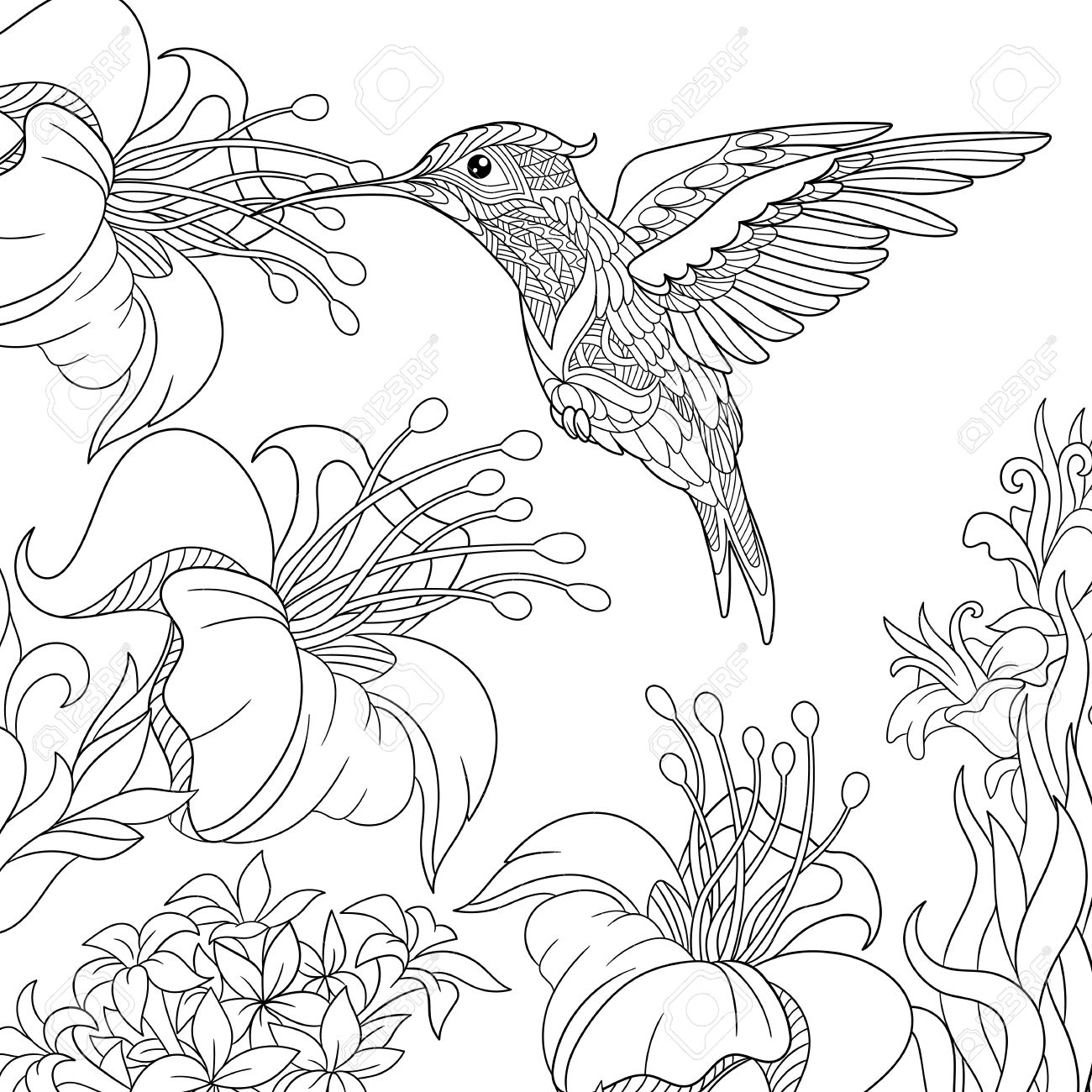coloring page of hummingbird and hibiscus flowers freehand sketch