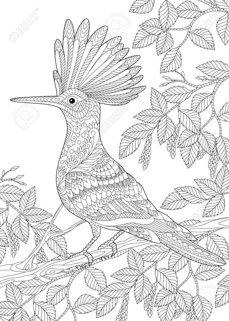Colorear De Pájaro Hoopoe (Upupa Epops) Sentado En La Rama Del árbol ...