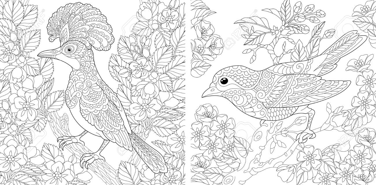 Adult coloring pages. Beautiful birds in the spring garden. Line art design for antistress colouring book in zentangle style. Vector illustration. - 146991223