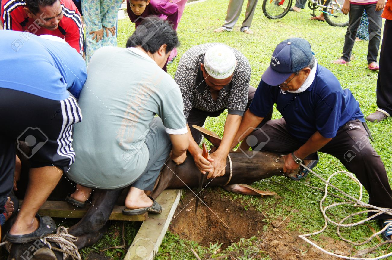 Malaysia Muslims Celebrate Eid Al-Adha By Slaughtering Sheep ...