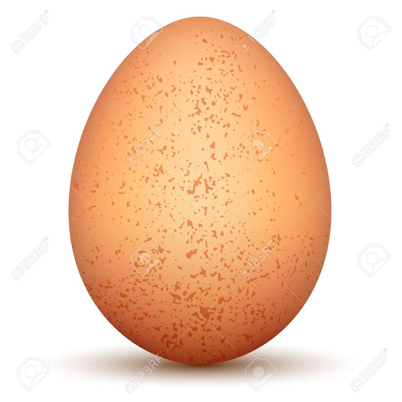 Egg Stock Vector - 15274623