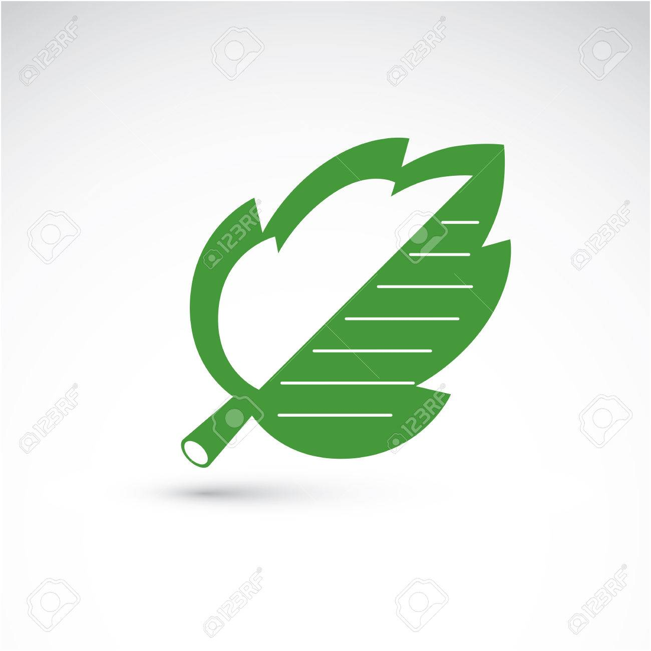 vector illustration of green hazel tree leaf isolated on white