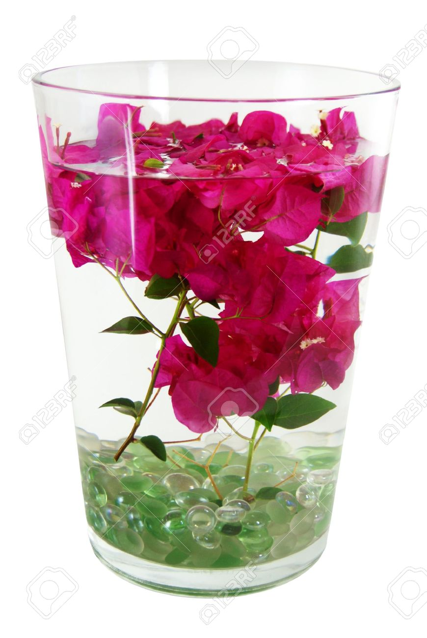 Pink bougainvillea flowers on stems submerged under water in..