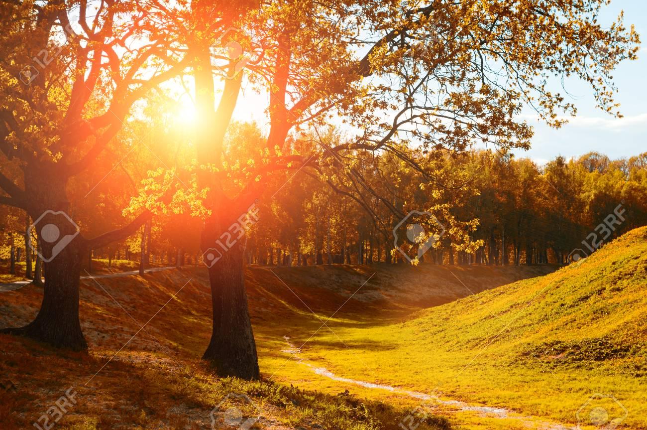 La Vista Del Paesaggio Di Autunno Degli Alberi Di Autunno Nel Parco Si è Accesa Dal Sole