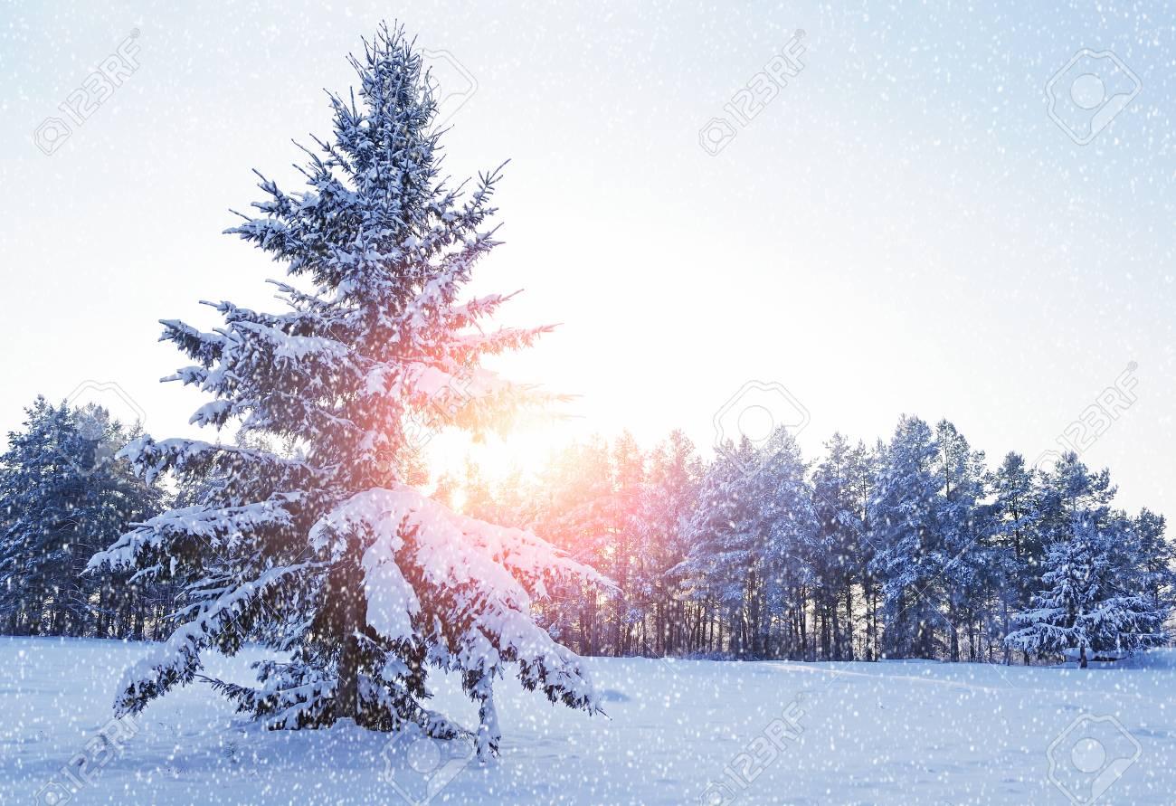 Paysage Dhiver Avec Forêt Sapin Enneigé Dans La Forêt Dhiver Sous La Neige Qui Tombe En Soirée Froide