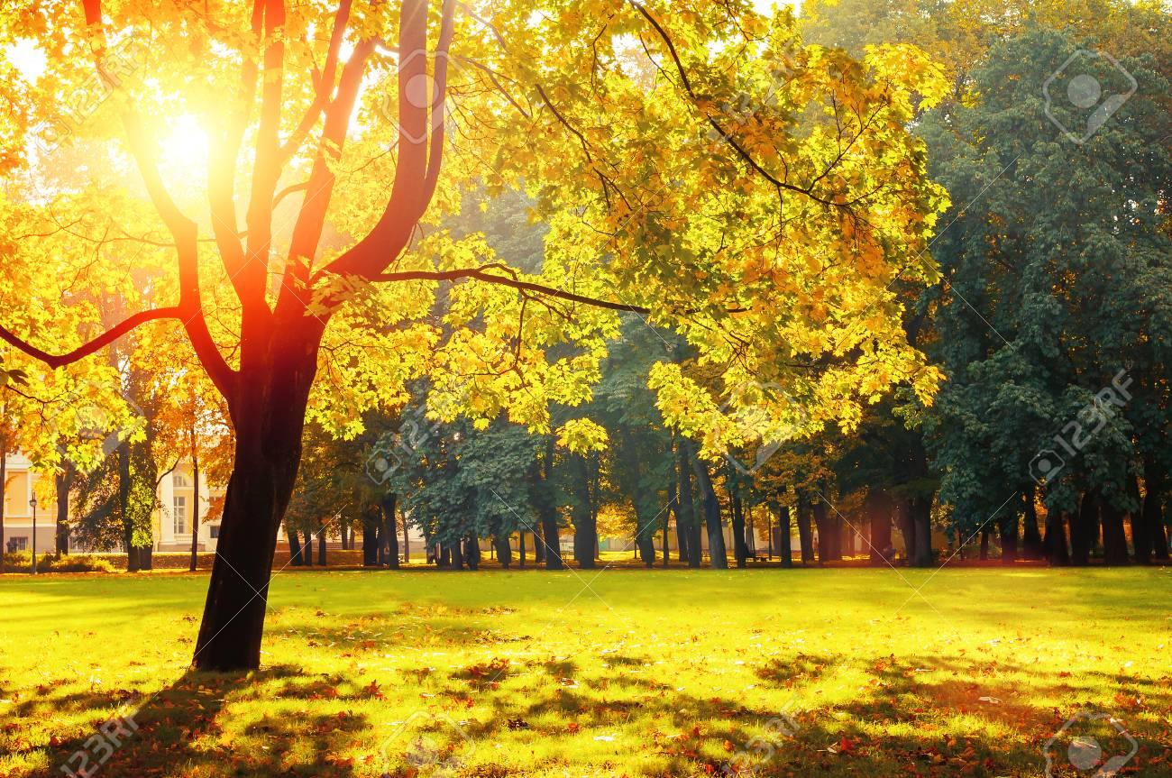 Paesaggio Autunnale Il Parco Soleggiato Di Autunno Si è Acceso Da Sole Luminoso Alberi Di Autunno Nel Parco In Tempo Soleggiato