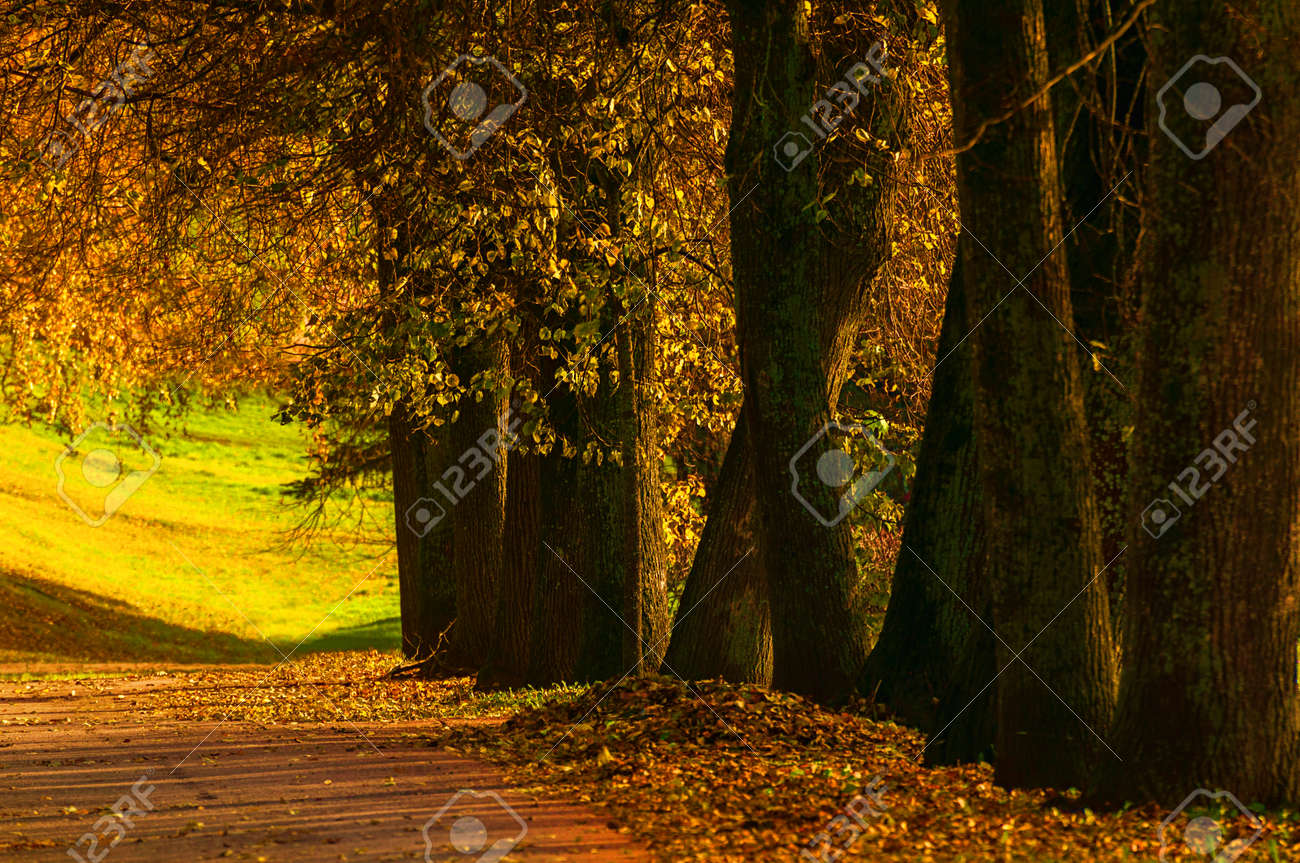 Autumn landscape. Autumn trees with golden foliage in the city October park, sunny autumn nature scene. Glow filter applied - 156178982