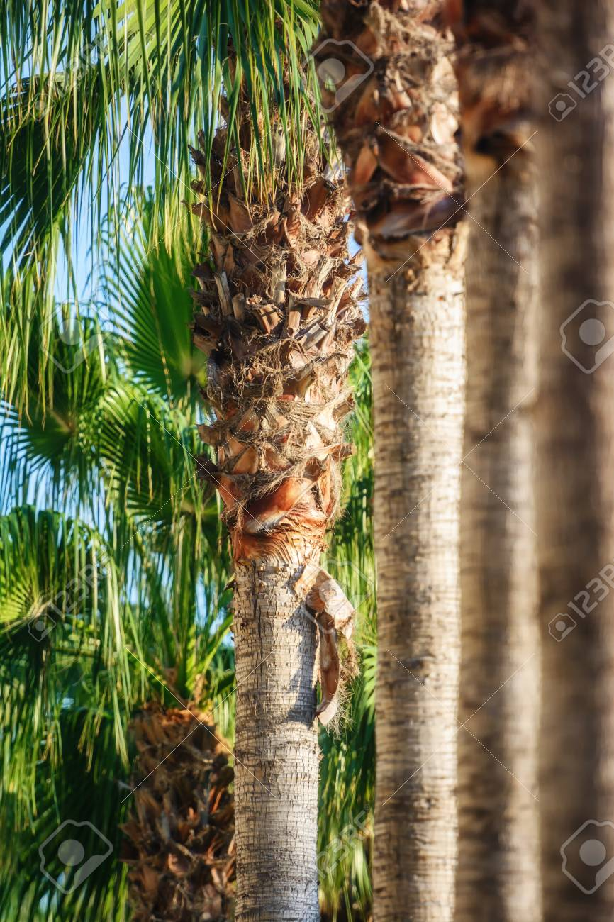 Palms Garden In Turkey, Side Stock Photo, Picture And Royalty Free ...