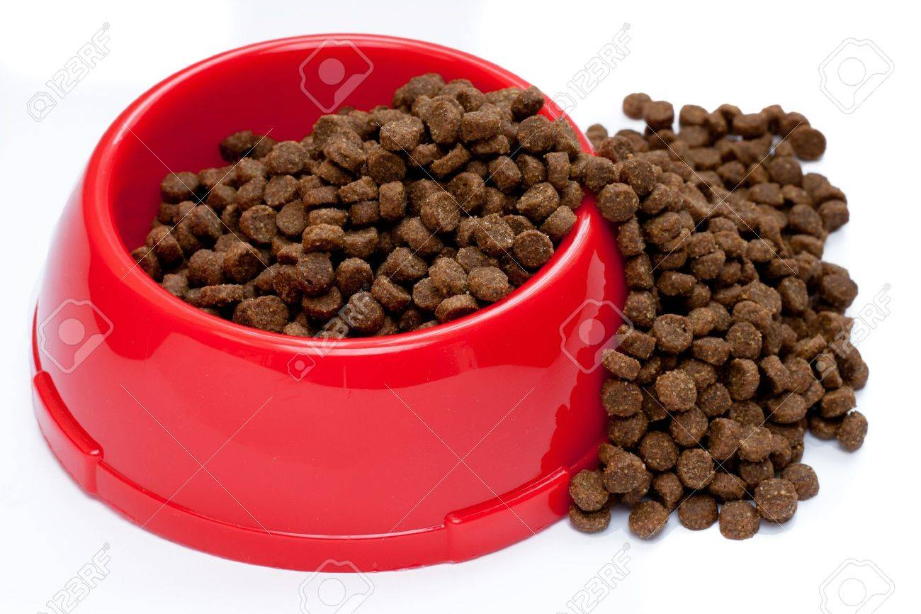 pet food in red bowl Stock Photo - 8473973