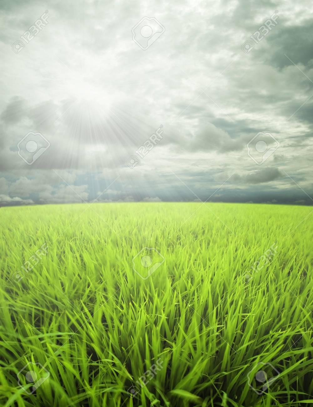 meadow, sky dan sunlight Stock Photo - 2831518