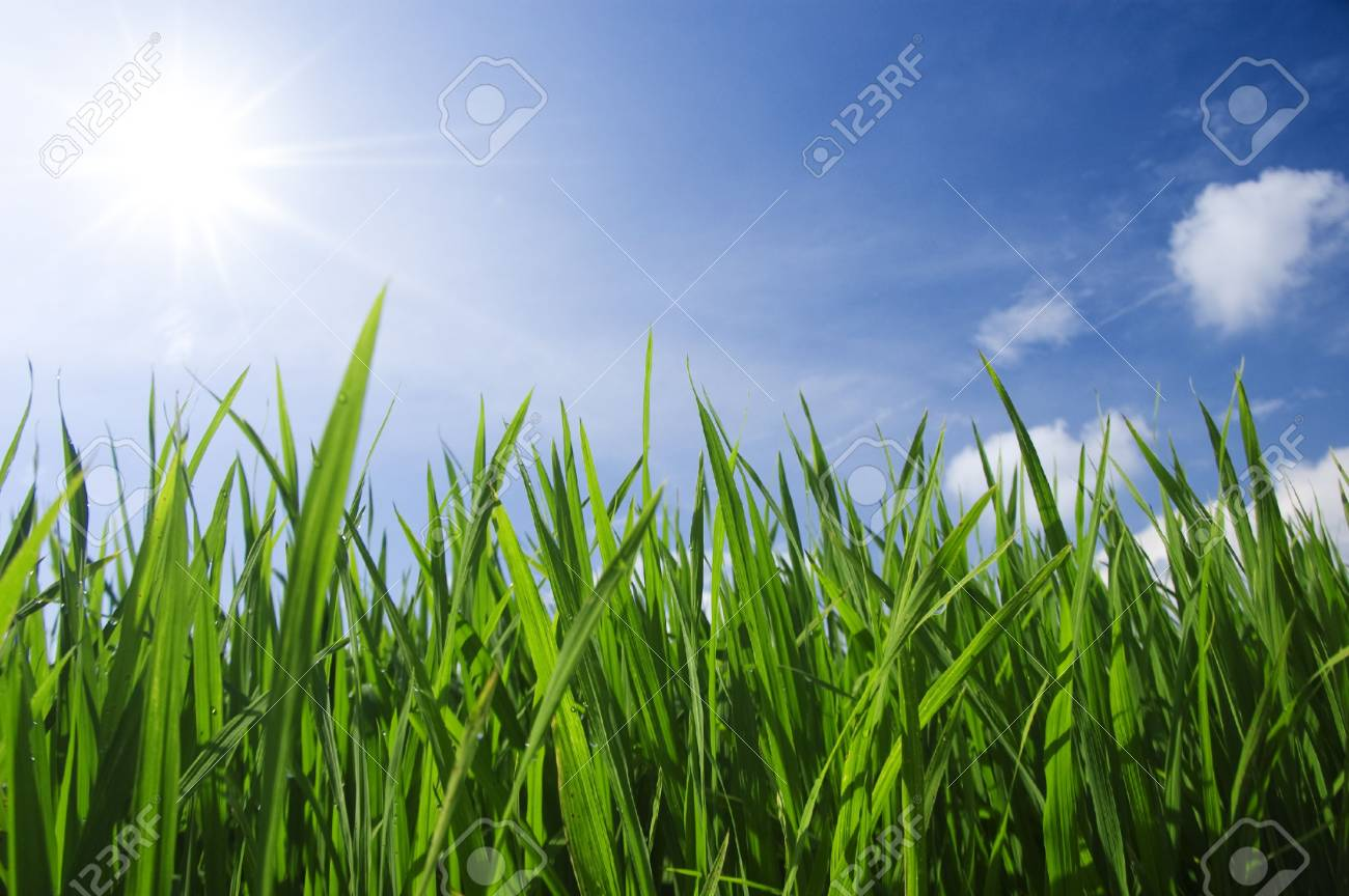 green grass and sky Stock Photo - 4121770
