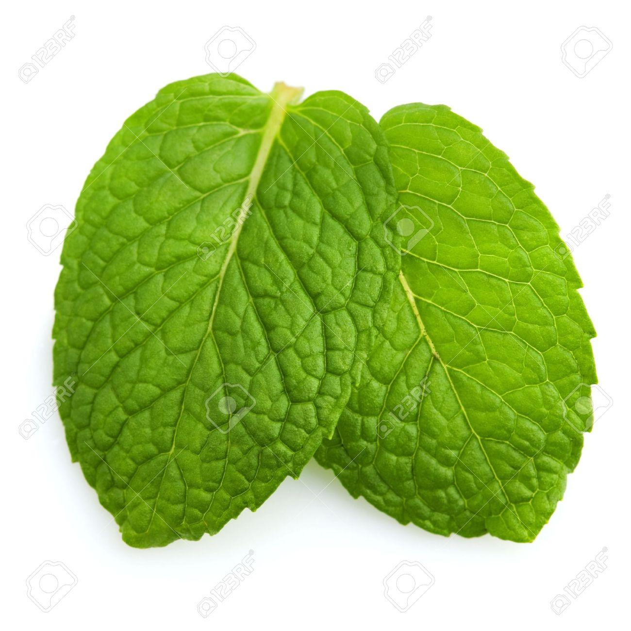 mint leaf images u0026 stock pictures royalty free mint leaf photos