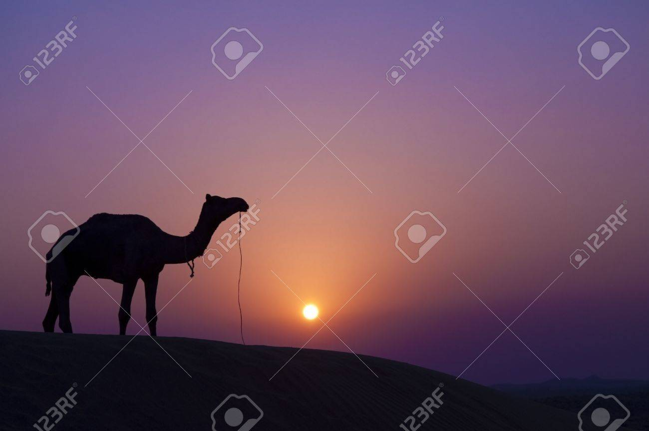 Desert landscape with camel at sunset Stock Photo - 10060419