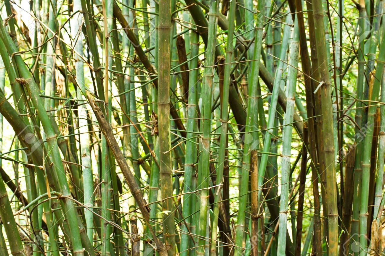 Green bamboo Stock Photo - 16852882