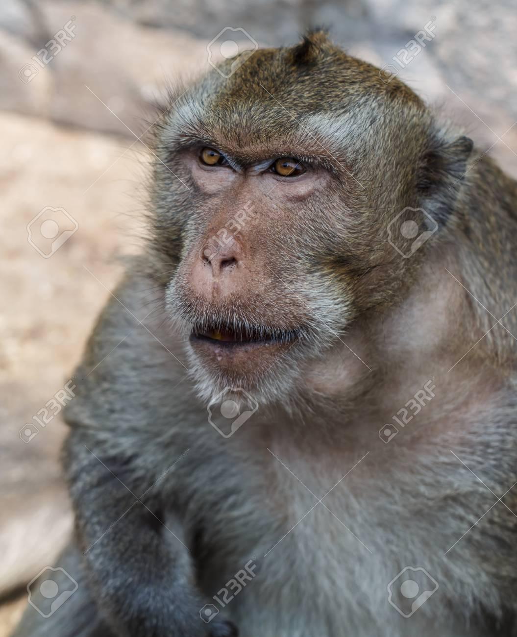 Ziemlich Süße Malvorlagen Von Affen Galerie - Malvorlagen Von Tieren ...