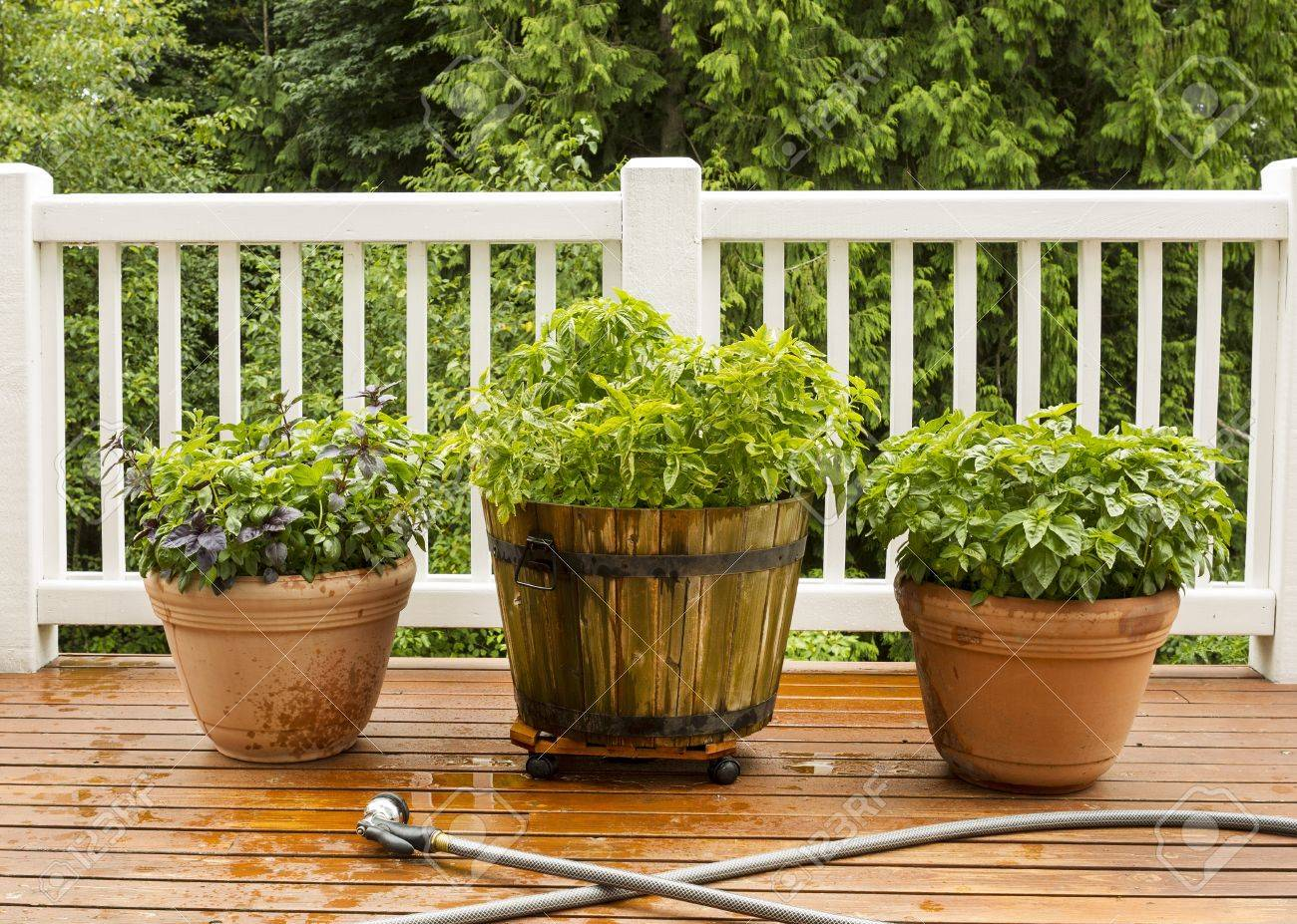 Horizontal Photo Of A Home Herb Garden, With Watering Hose In Front Of Pots  On