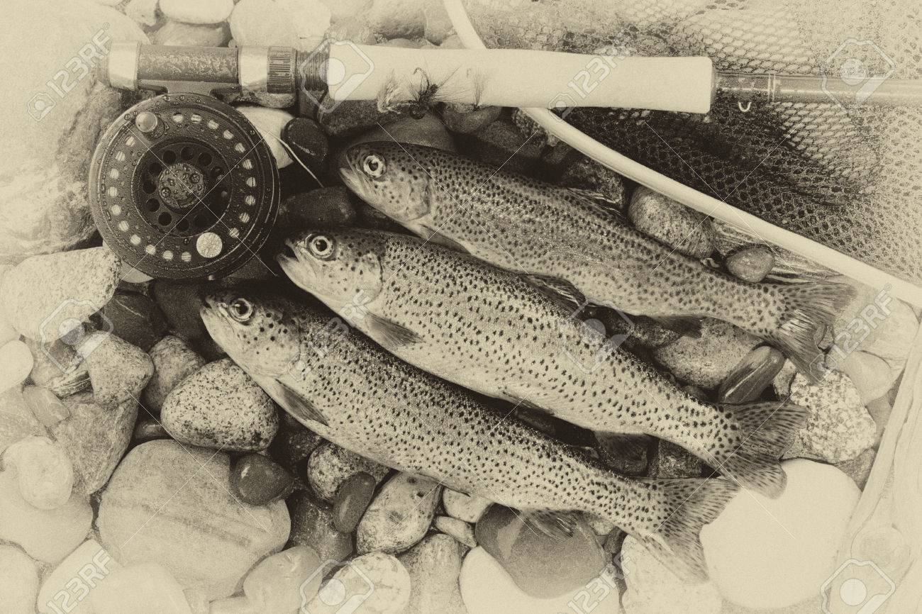 Three wild trout with fishing fly reel, landing net and assorted flies on wet river bed stones with vintage concept. - 38656331