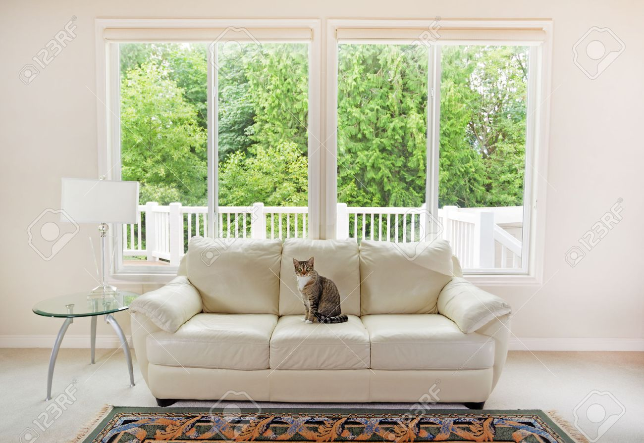 Design Window Couch family cat sitting on white leather couch and large windows showing bright green trees in background
