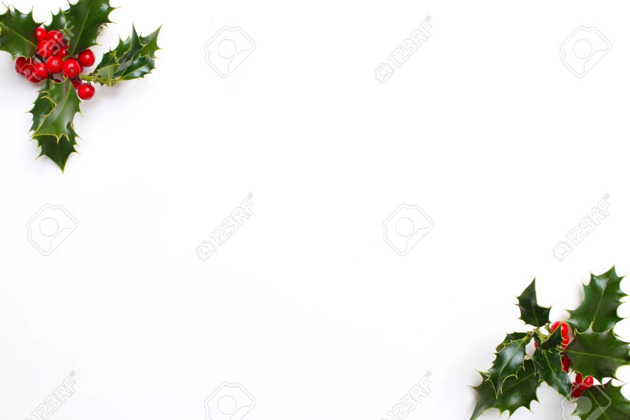 Immagini Agrifoglio Di Natale.Decorazione Floreale Dell Agrifoglio Di Natale Su Priorita Bassa Bianca Foglie Sempreverdi Con Bacche Rosse E Spazio Vuoto Per Il Testo Di Vacanza