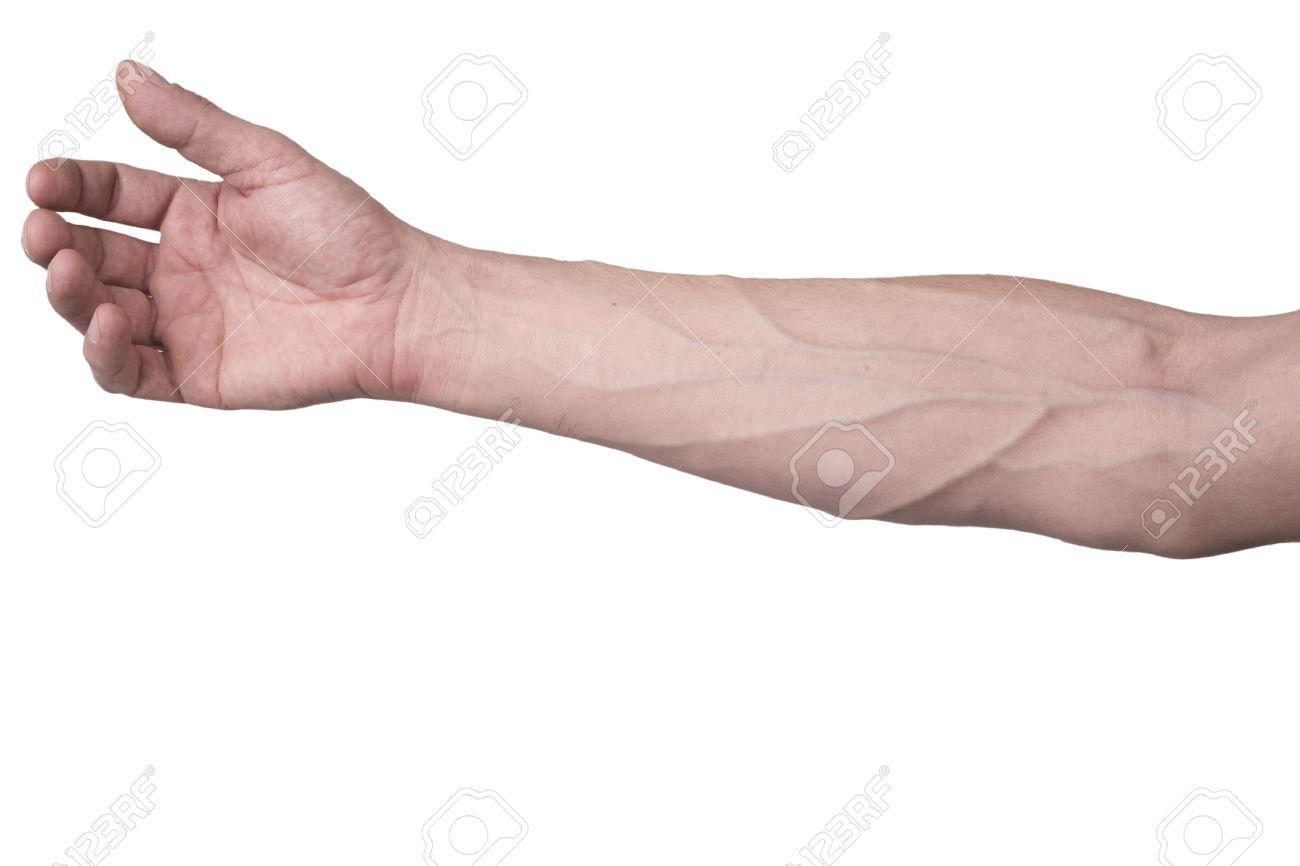 Veins Arm Stock Photos. Royalty Free Veins Arm Images