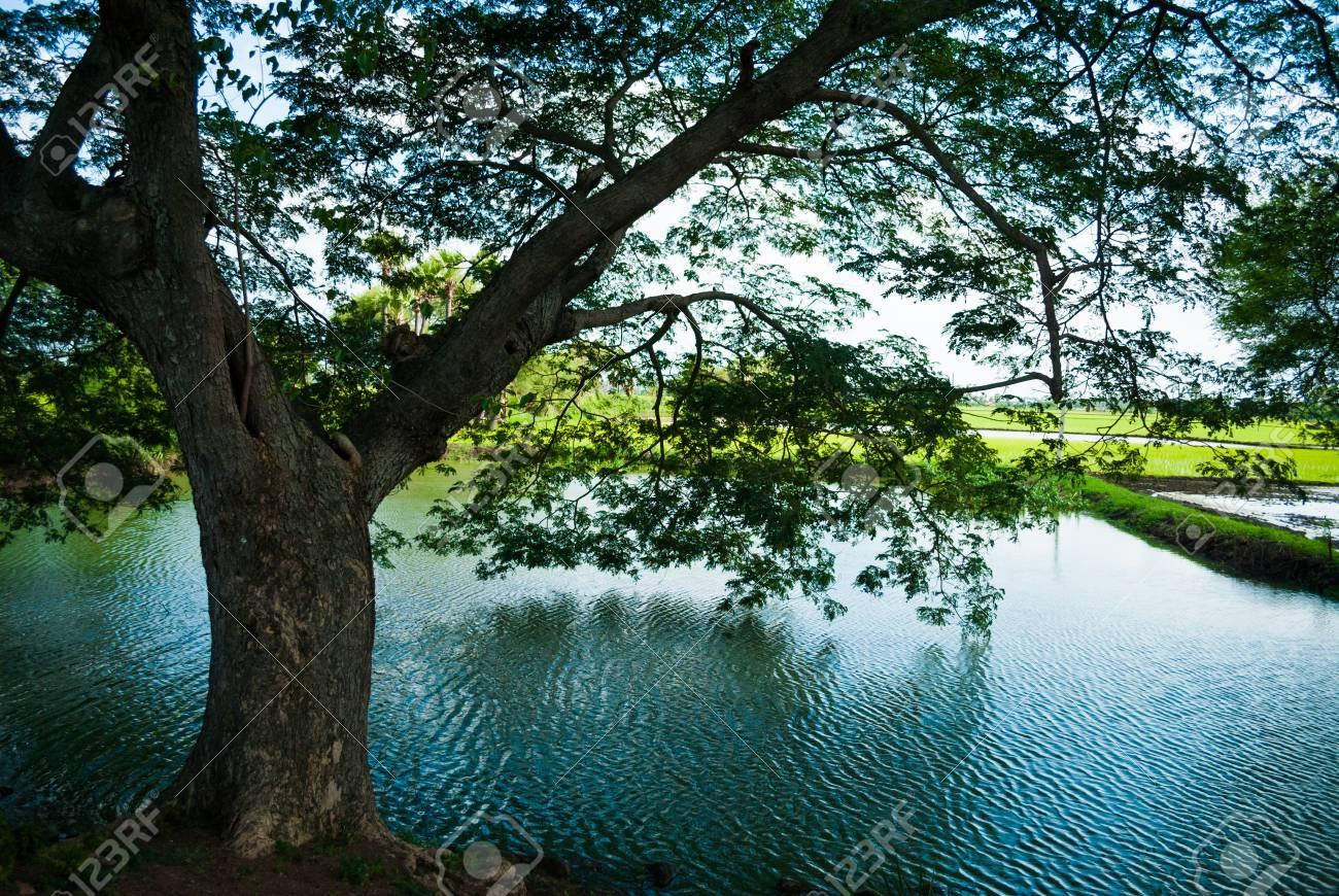 木 から 水 どこ の 国