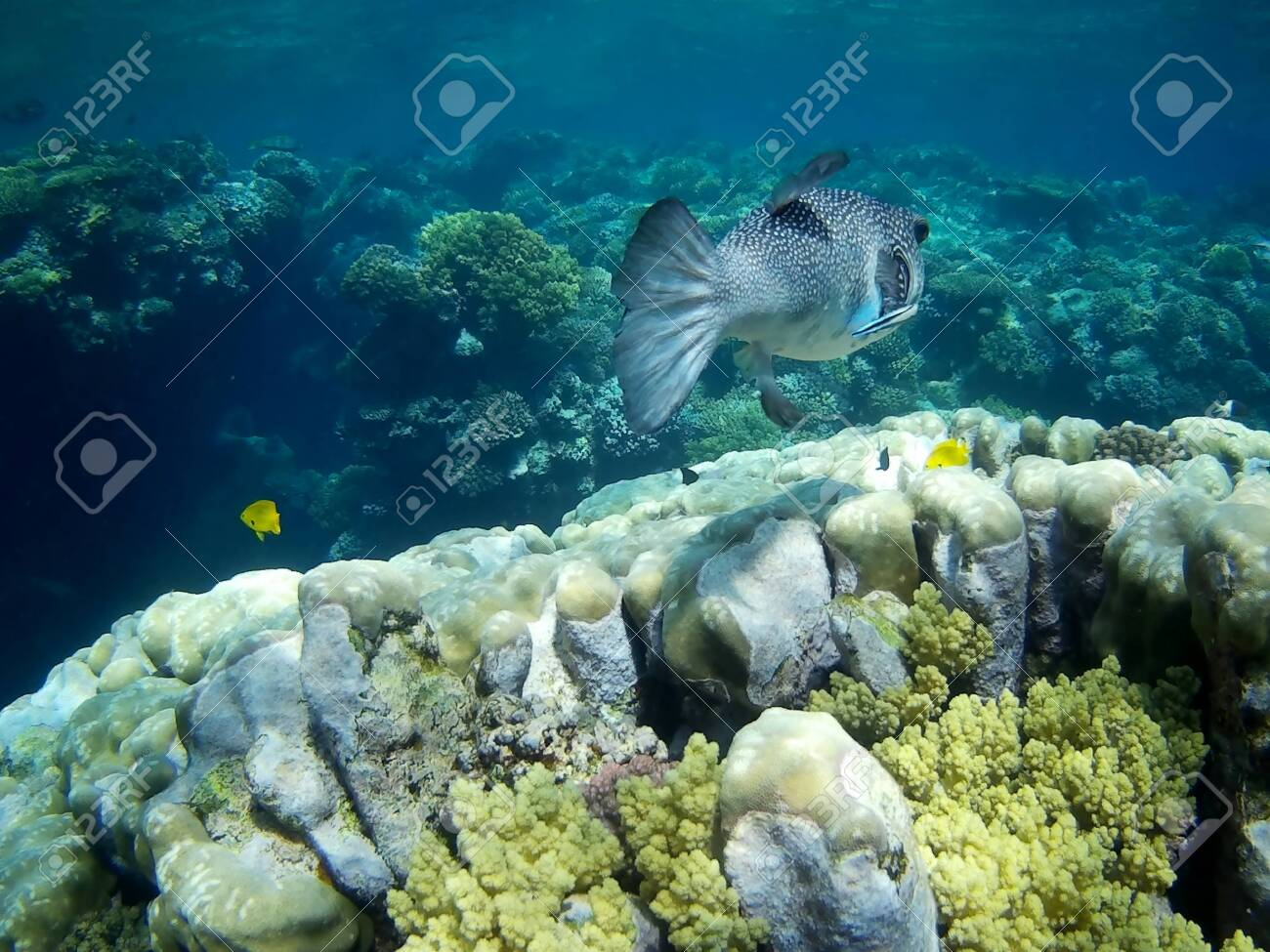 Beautiful Tropical Fish And Coral Reef Near Utopia Beach Marsa Stock Photo Picture And Royalty Free Image Image 140599758