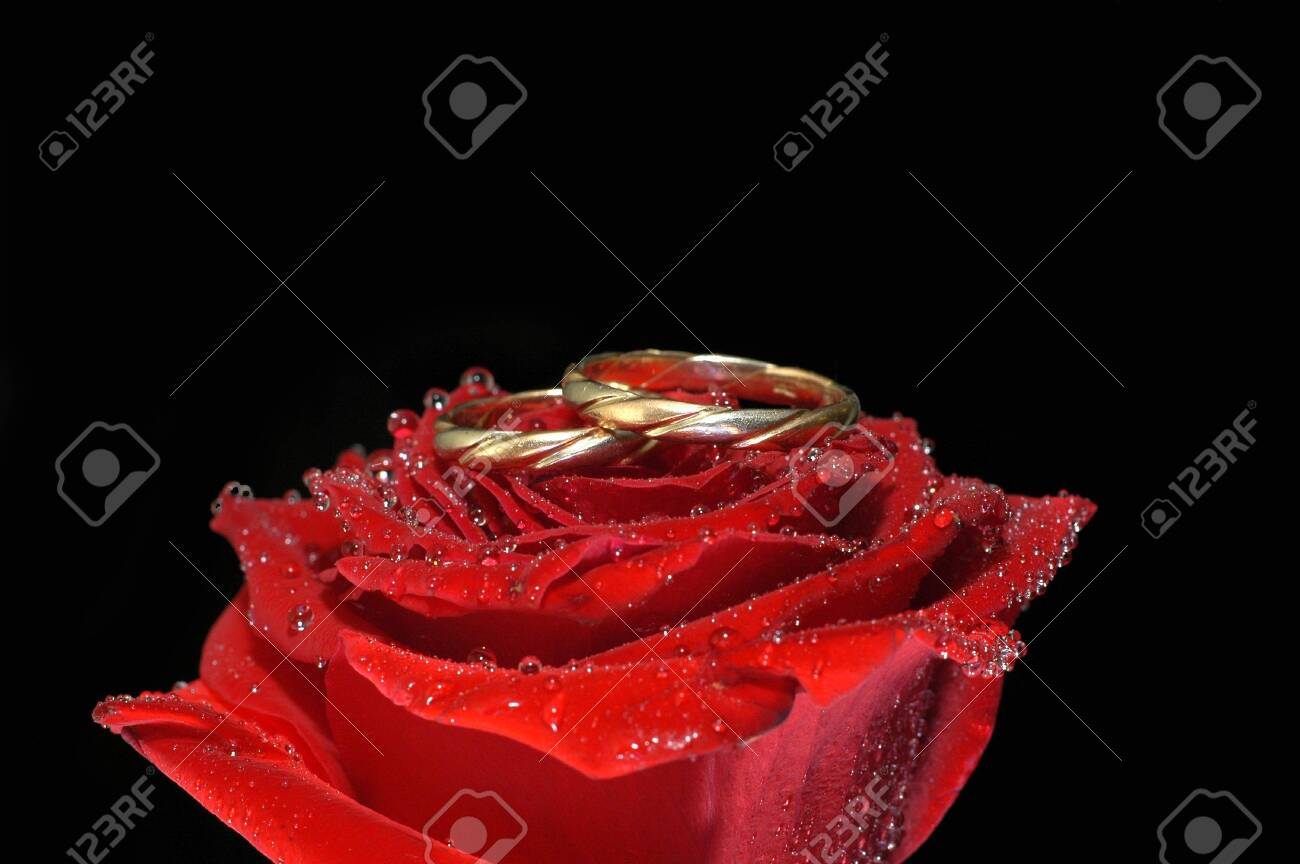 red rose with rings isolated on black Stock Photo - 5724797