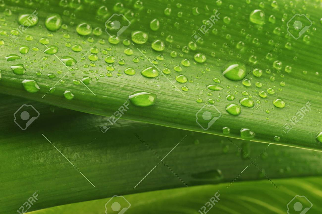 green leaf and water drop close up Stock Photo - 6125408