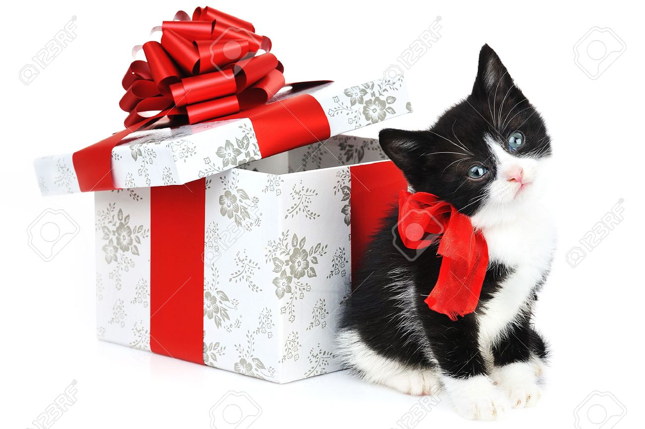 Small Cute Kitten Near Gift Box Stock Photo, Picture And Royalty ...