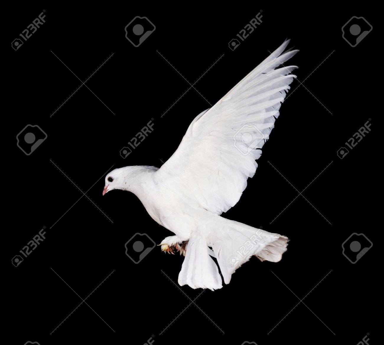 Beautiful white pigeon and female hand close up Stock Photo - 7778069