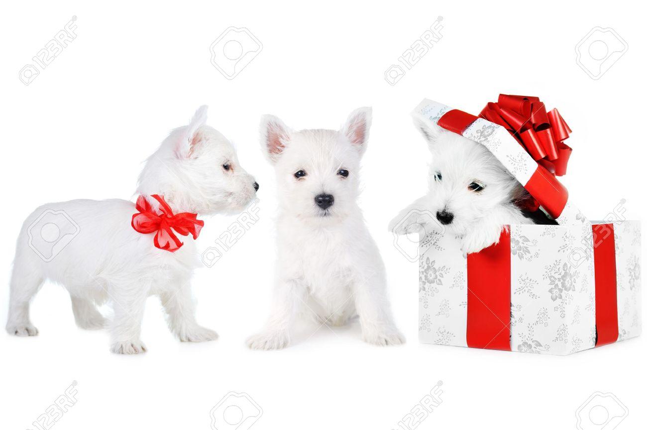 Amusing   white puppys on whitebackground Stock Photo - 10461209