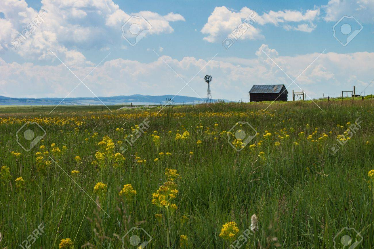 Colorado family farm with a green field and yellow flowers stock colorado family farm with a green field and yellow flowers stock photo 21675097 mightylinksfo