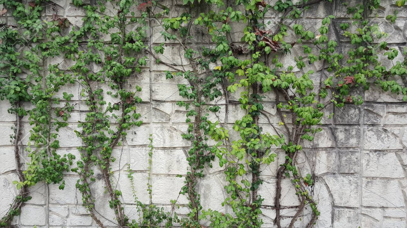 Plants Growing On The Wall Stock Photo Picture And Royalty Free Image Image 117289115