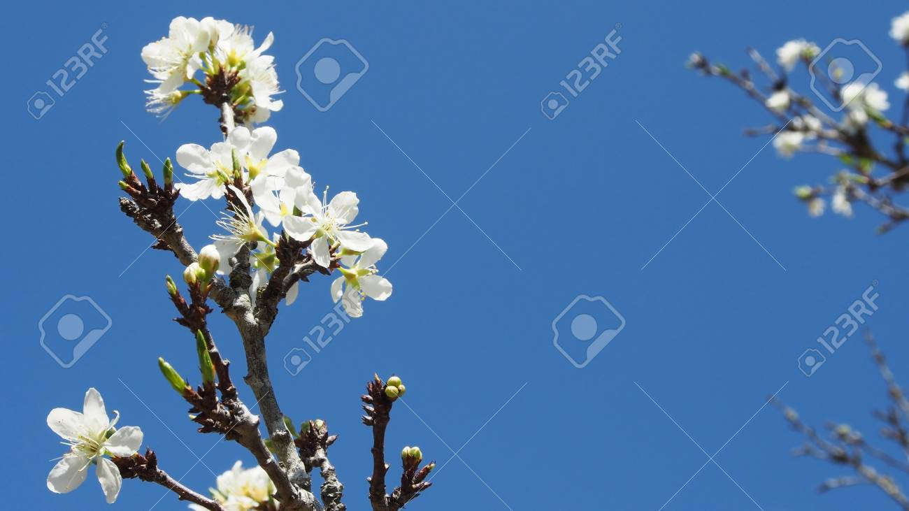 Colorful flowers bloom on tree with blue sky bachground stock photo colorful flowers bloom on tree with blue sky bachground stock photo 36420410 izmirmasajfo