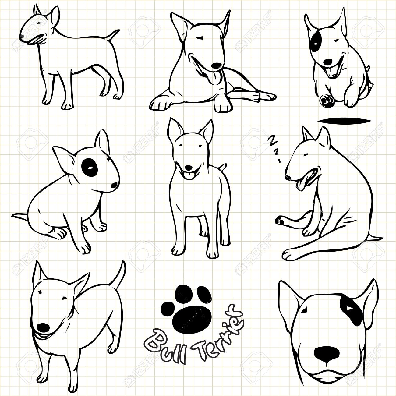 Line drawing of Bull terrier dog set on grid paper use for elements design. - 48205025