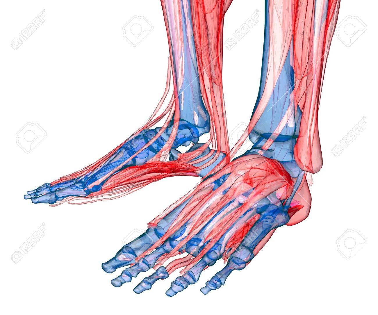 Human feet under X-rays isolated on white Stock Photo - 20929285
