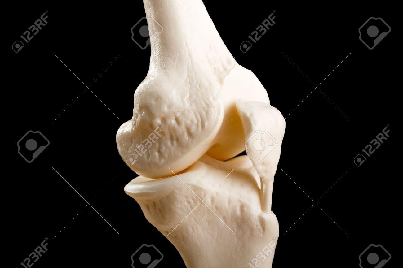 Anatomía De Una Rodilla Humana Con El Fémur, La Tibia Y El Peroné ...