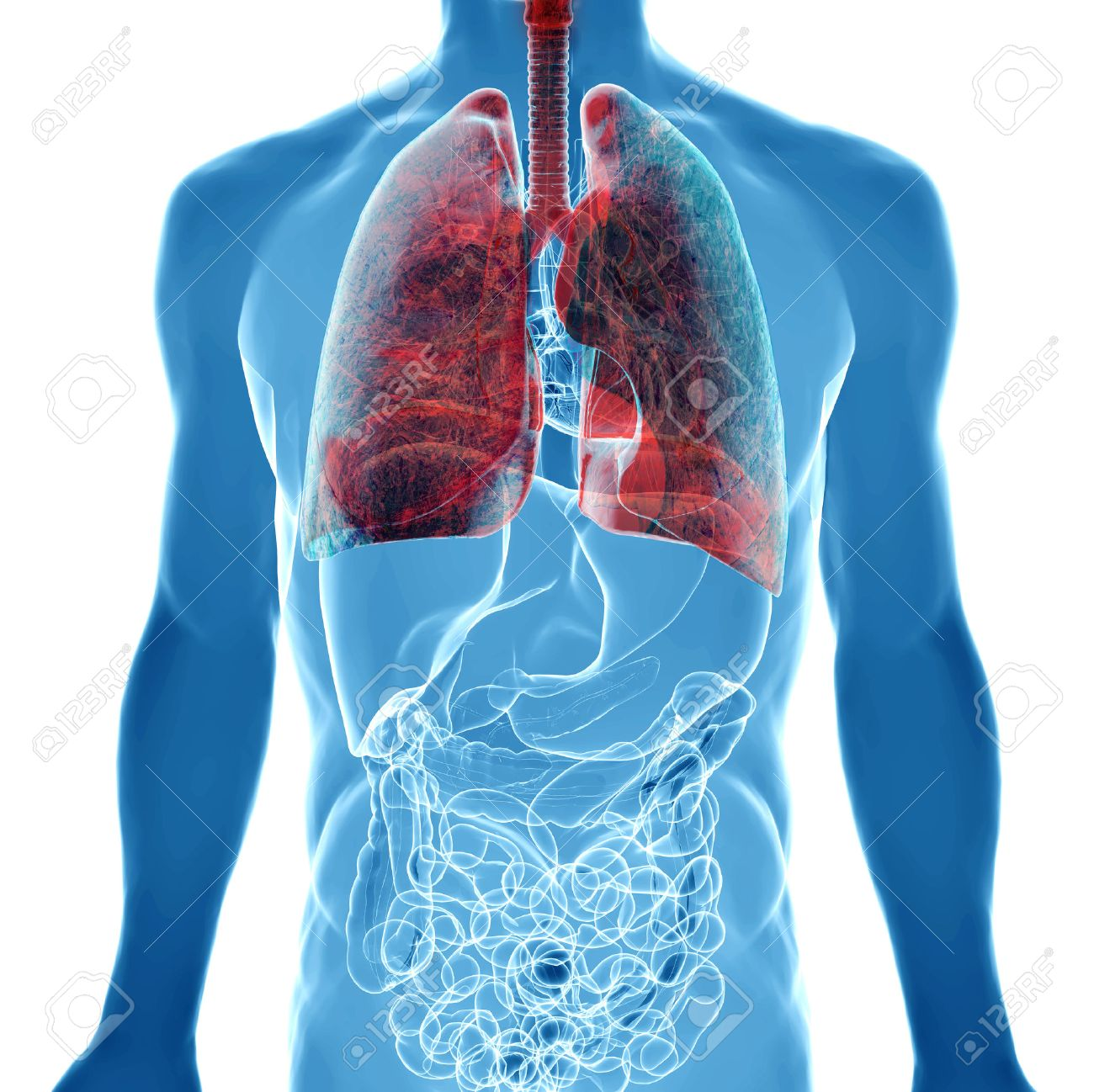 Human Body Under X-rays Isolated On White With Highlighted Lung ...