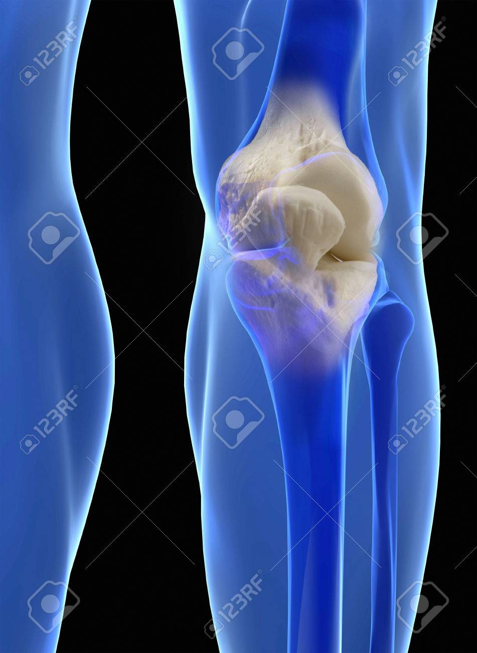 Human Knee Anatomy With Femur, Tibia And Fibula Bones Under X-rays ...