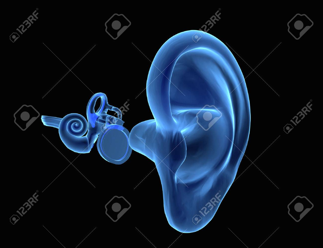 3d Illustration Of Ear Anatomy With Eardrum Malleus Incus And